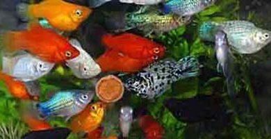 Домашний аквариум - полезные советы
