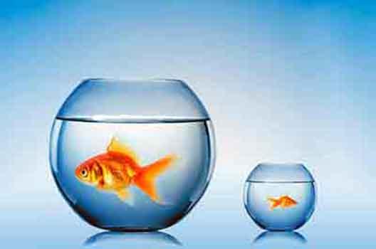 Какой аквариум лучше большой или маленький?