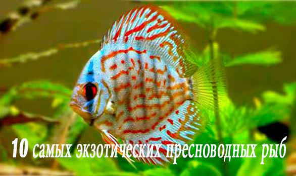 10 самых экзотических пресноводных рыб