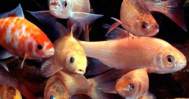 Рыбы вовсе не так забывчивы, как принято считать