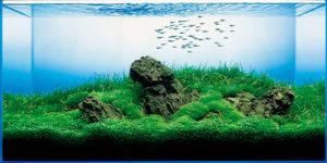 Тип аквариума в соответствии с природной средой рыб