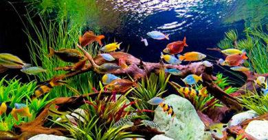 Типы аквариума в соответствии с их назначением