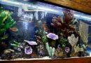 Вещи, о которых забывают начинающие аквариумисты…