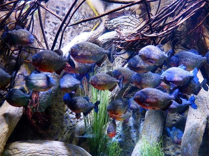 10 наивных вопросов начинающего аквариумиста