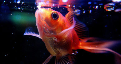 Способы кормления аквариумных рыб и типы продуктов питания