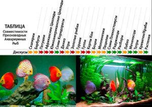 Схема уживаемости дискусов с другими аквариумными обитателями