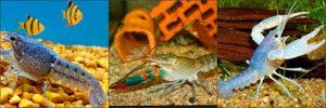 Совместимость аквариумных раков с рыбами