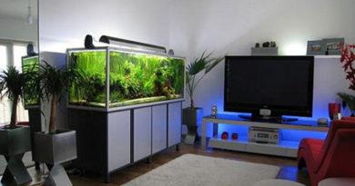 Преимущества пресноводных тропических рыб