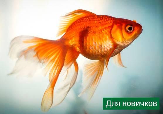 Аквариумные рыбки: названия самых популярных комнатных видов по алфавиту для аквариума, каталог, описание для новичков