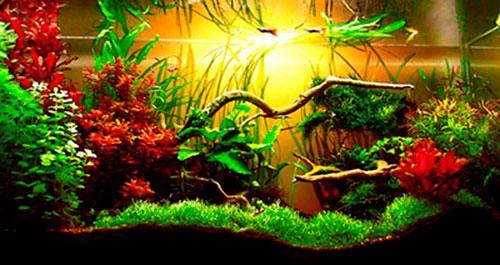 Аквариумные растения – выбор и посадка