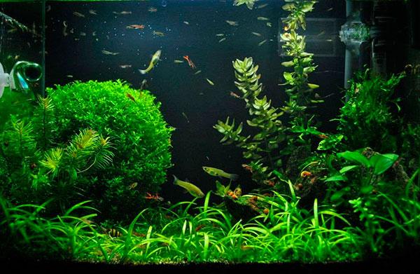 Лучшие аквариумные растения для начинающих
