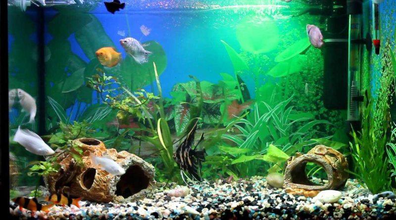 Что можно использовать для декорирования аквариума?