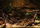 Биотоп Рио-Негро, Бразилия. Объем аквариума: 315 л