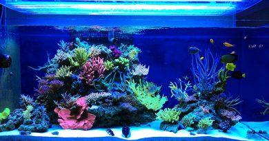 Несколько простых шагов по обустройству морского аквариума